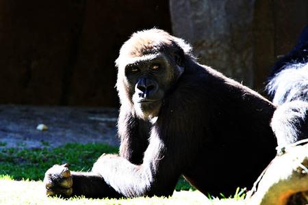 Web20070224_wild_animal_park_2032