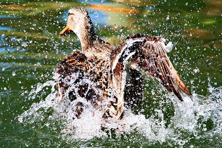 Web20070224_wild_animal_park_2872