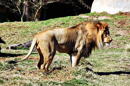 Web20070224_wild_animal_park_3172