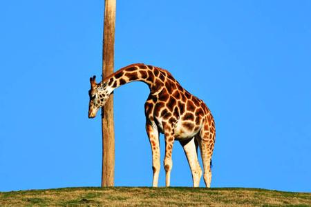 Web20070224_wild_animal_park_5522