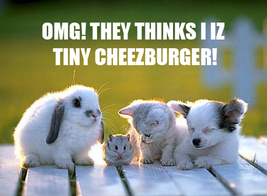 Tinycheezburgerlee